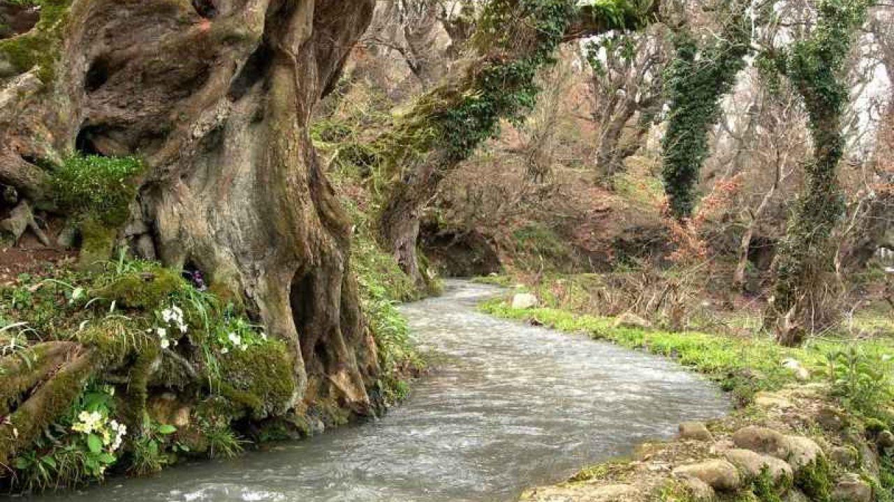 میزان روانآب رودخانههای دائمی مازندران ۴۵ درصد کاهش یافت